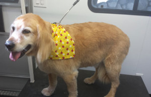Temecula Dog Grooming