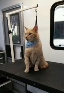 Temecula cat grooming