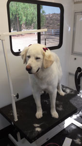 Mobile Dog Grooming Service Wildomar, California