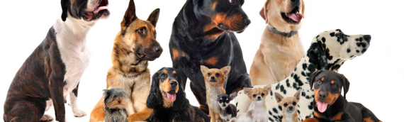 Benefits of Organic Dog Treats